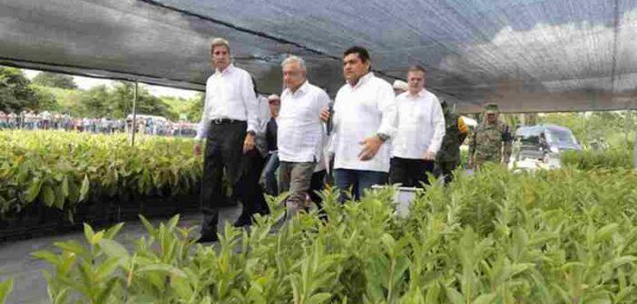 Kerry dice que AMLO puede contar con ayuda de EU para su programa de reforestación